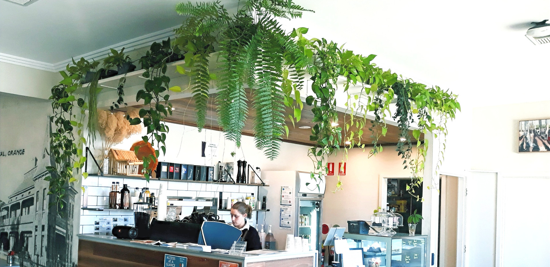 Some greenery with your daily coffee