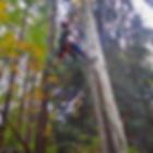 tree climbing, arborist, bainbridge island, tree care, tree removal, ISA arborist