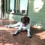 dog walker birmingham alabama meet n greet