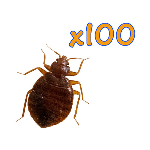 100 live Bed Bugs For Sale
