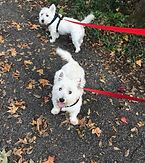 dog walker helena alabama small white dog