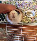 small animal pet sitting birmingham alabama