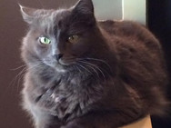 Red Dog Sitting grey cat