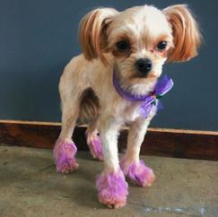 Dog Fur Dye