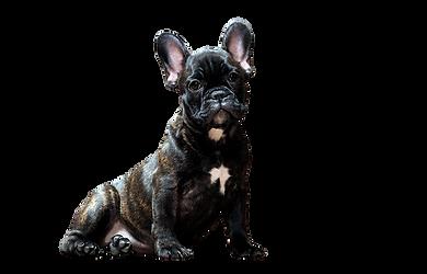 dog-2975557_1280.png