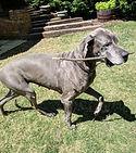 dog sitting birmingham alabama