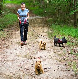 pack-dogs.jpg