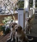 pet sitting hoover alabam multiple dogs