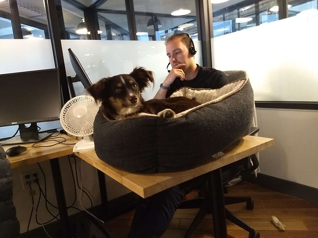 Invisors employee working with dog on desk