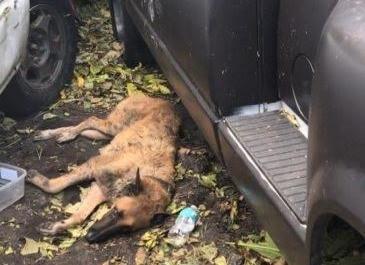 Hurricane Irma Animal Rescue