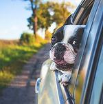 pet taxi service