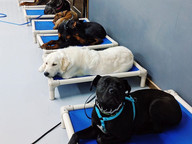 group dog obedience training