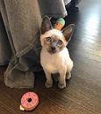 cat sitter birmingham alabama