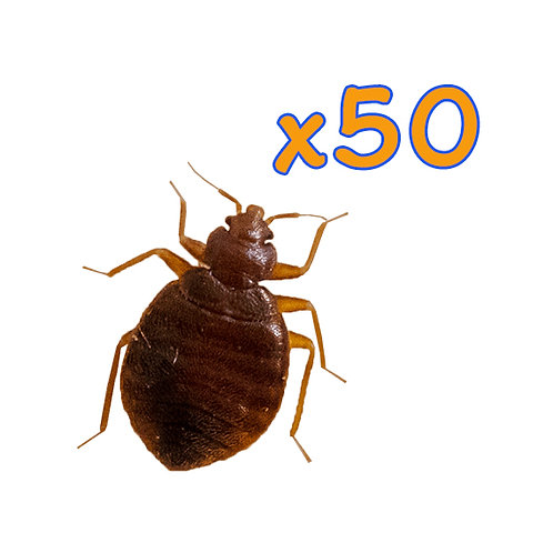 50 bed bugs for sale