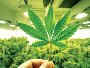 Recreational Marijuana in Montana