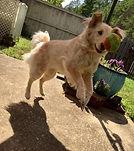 dog walking birmingham alabama dog playin