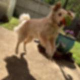 pet sitter dog birmingham AL