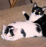cat sitting birmingham alabama