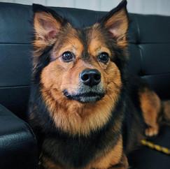 Medium Dog Grooming