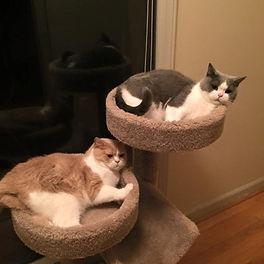 Huntsville AL Cat Sitting