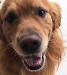 pet sitting alabaster alabam dog