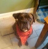 Red dog sitting service testimonials