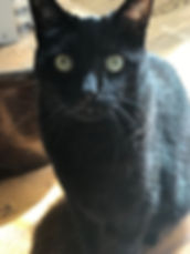 Black Cat Sitting, pet sitting dog walking duluth GA