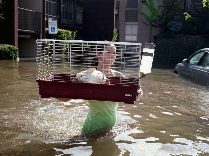Hurricane Harvey Animal Rescue