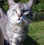 cat sitter birmingham alabama testimonial