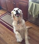 best pet sitter birmingham alabama golden retriever