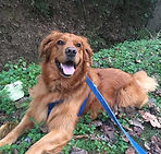 professional pet sitting birmingham al