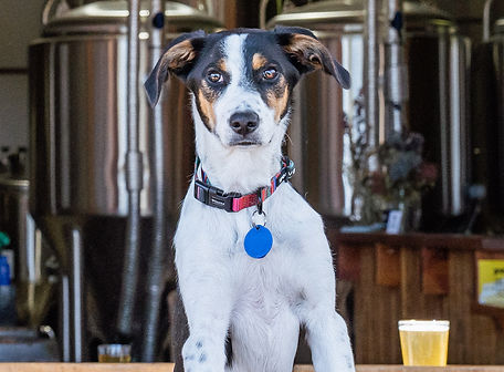 RxR Brewery Images + Dogs-19.jpg