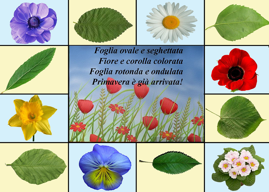 primavera seconda2 copia.jpg