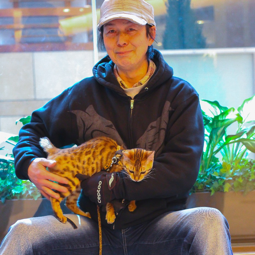 An owner of a Bengal cat