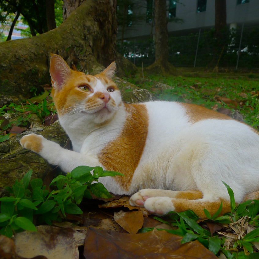 Friendly neighborhood Kitty
