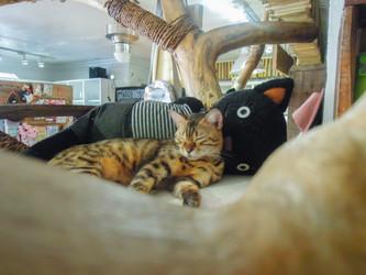 Miao Cat Café