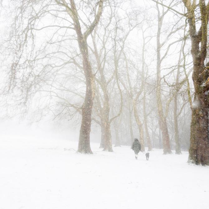 Enjoying the snow! walking the dog