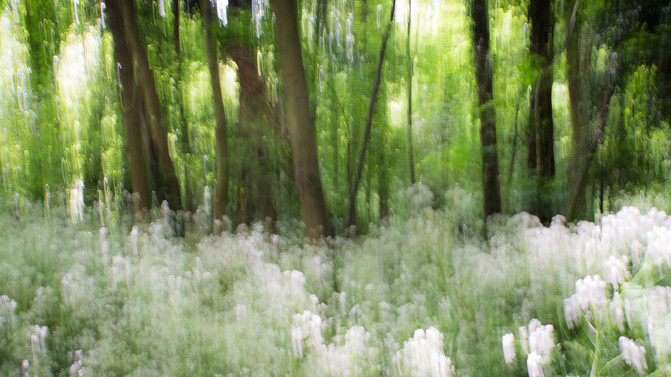Experimenting with Impressionist photos