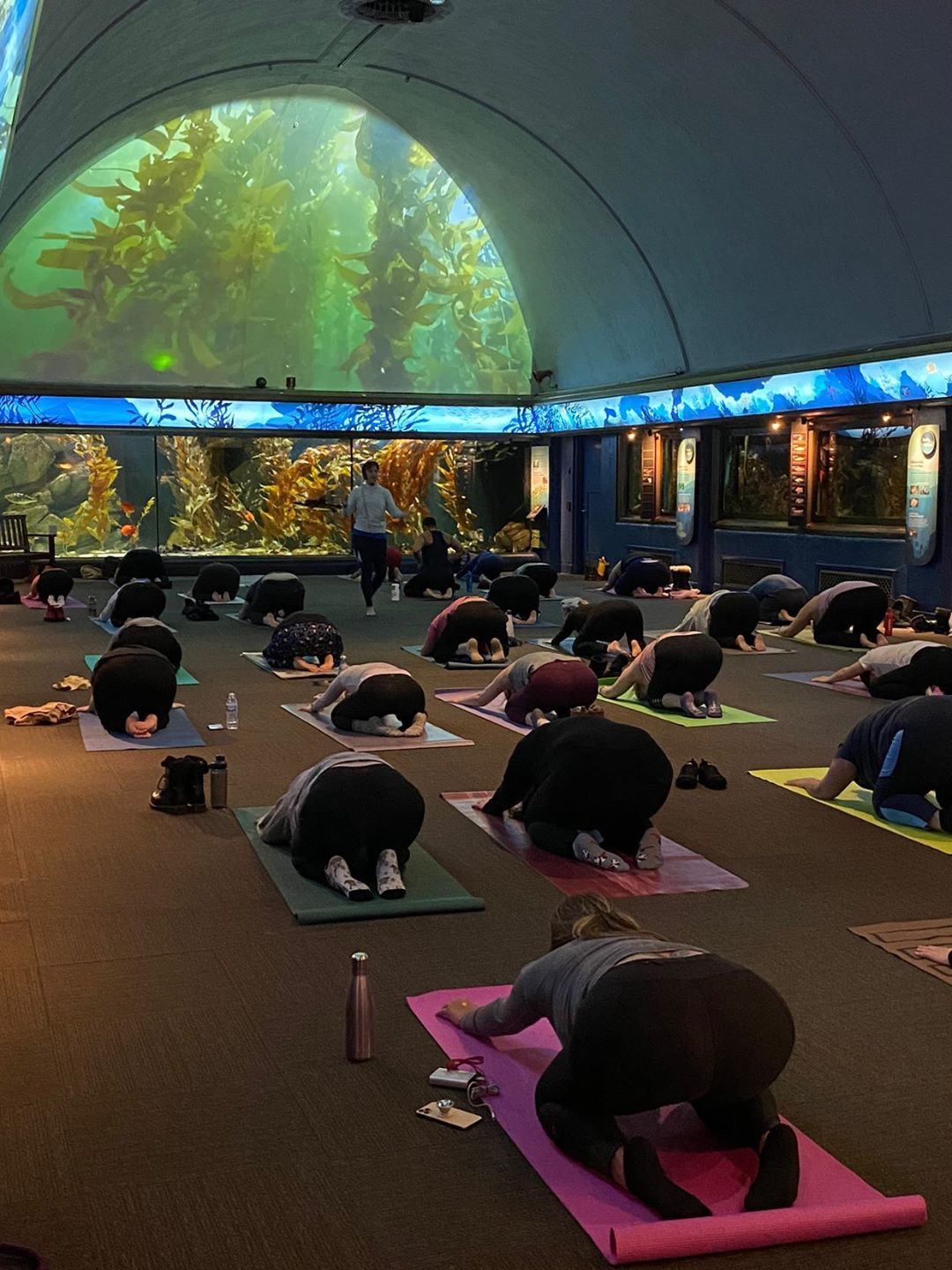 yoga at the shedd