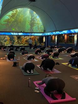 yoga at the shedd