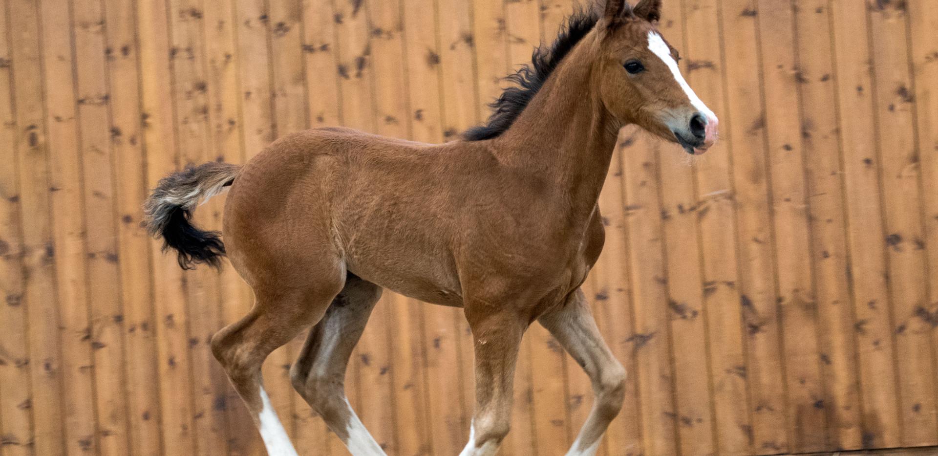 MM Sweet Pea Foal 2019 Gem.jpg