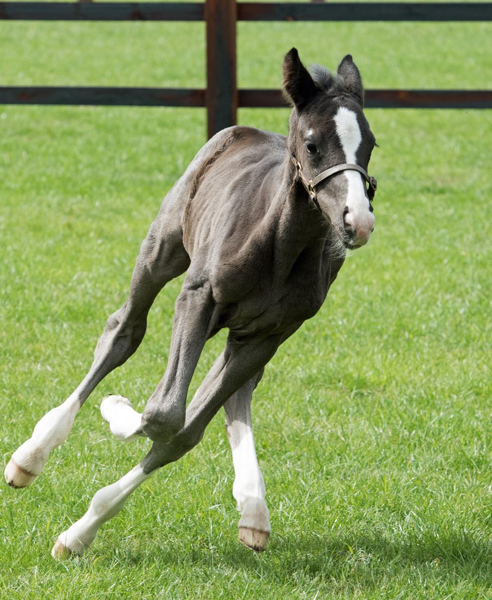 MM Quaterflo Colt Foal 4