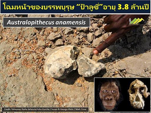 โฉมหน้าบรรพบุรุษ ป้าลูซี อายุ 3.8 ล้านปี