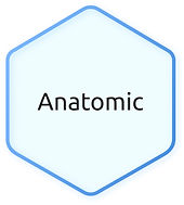 Anatomic-1.jpg
