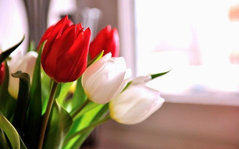 tulips-wallpaper-325811_edited.jpg