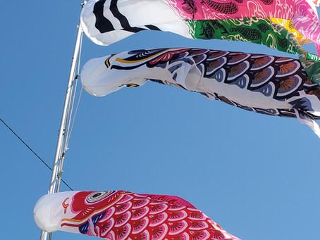 鯉のぼりの季節です