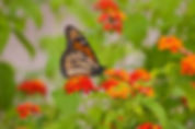 butterfly-garden-firstimage.jpg