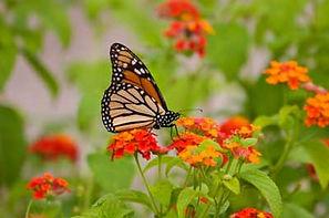 butterfly-garden-firstimage.jpg