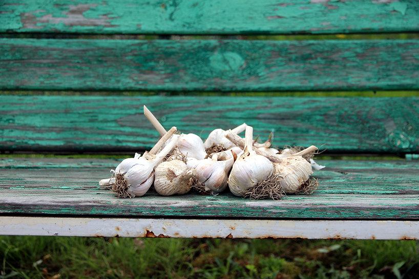garlic-3377808.jpg