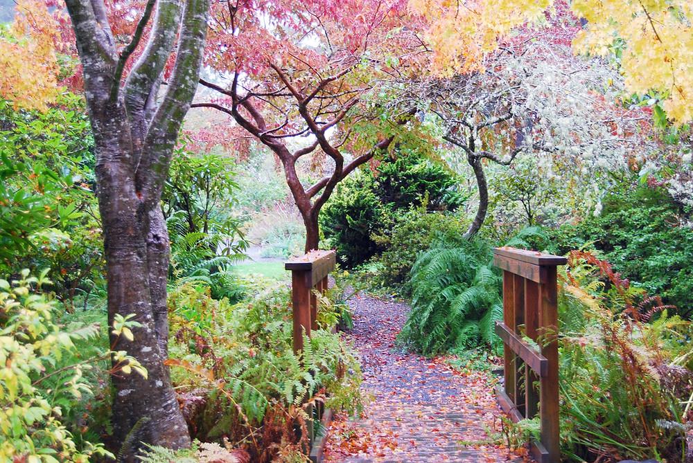AutumnFoliage+(3).JPG